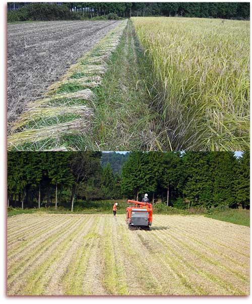 刈り入れ後の田んぼ