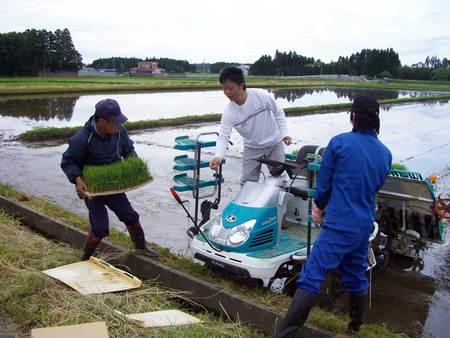 田植えの助っ人たち