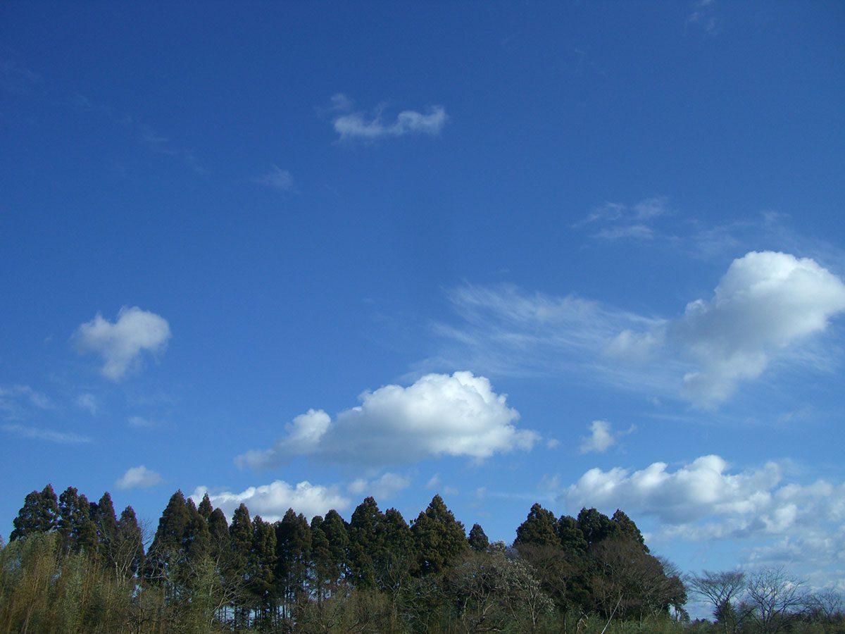 豊田農園の空