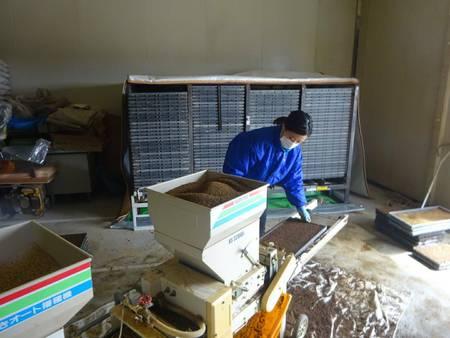 籾蒔き作業