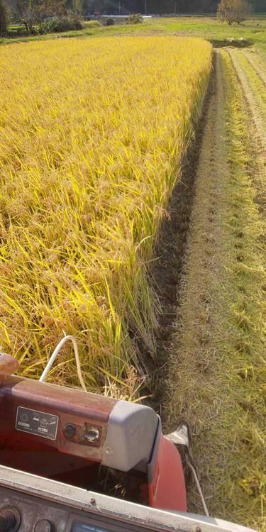 コンバインから刈り取り風景