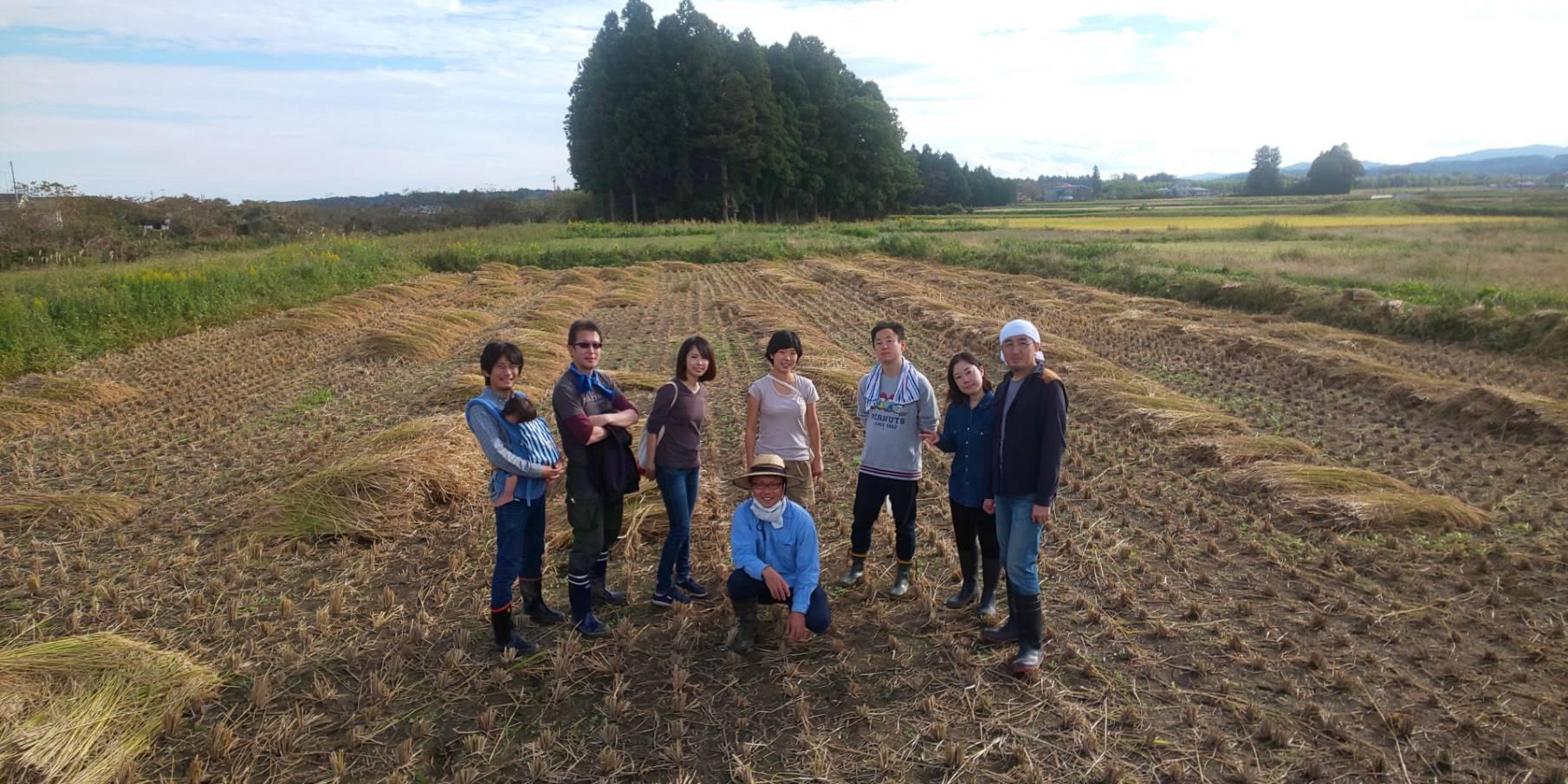 稲刈りボランティアの皆さま