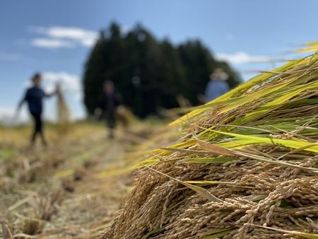 2019年の稲刈りの風景